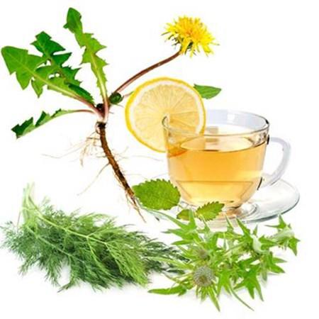 Làm trà chữa bệnh từ bồ công anh