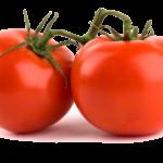 Hướng dẫn cách trồng cây cà chua và những lưu ý khi chăm sóc cây cà chua