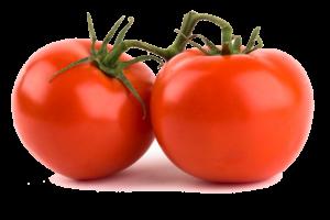 cách trồng cây cà chua