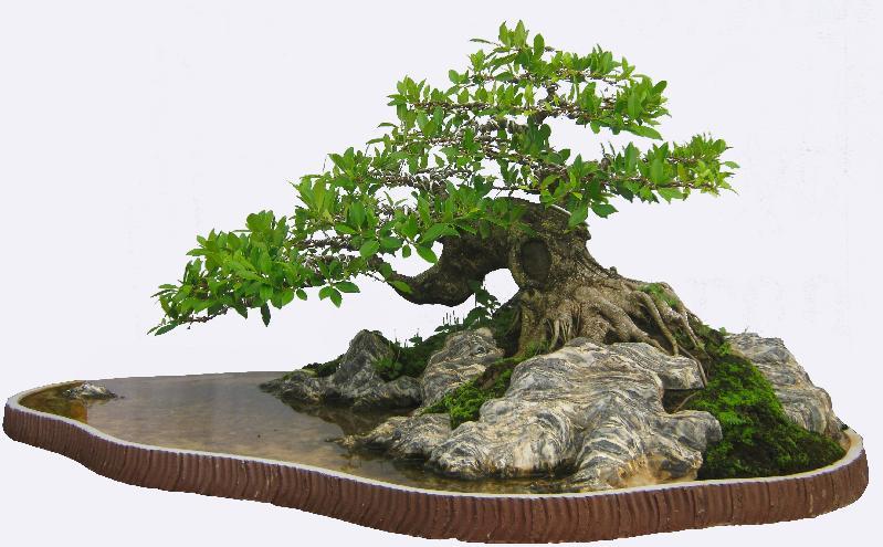 Tỉ mĩ hơn với bonsai