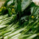 Kết quả nghiên cứu quy trình kỹ thuật sản xuất hạt giống cải ngồng Lạng Sơn