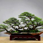 Tổng hợp 12 cây cảnh dễ trồng tại nhà
