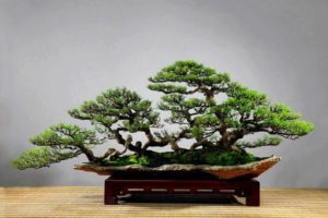 cây cảnh dễ trồng tại nhà