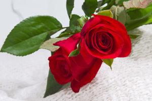Hoa hồng được ứng dụng rất nhiều trong việc chữa bệnh