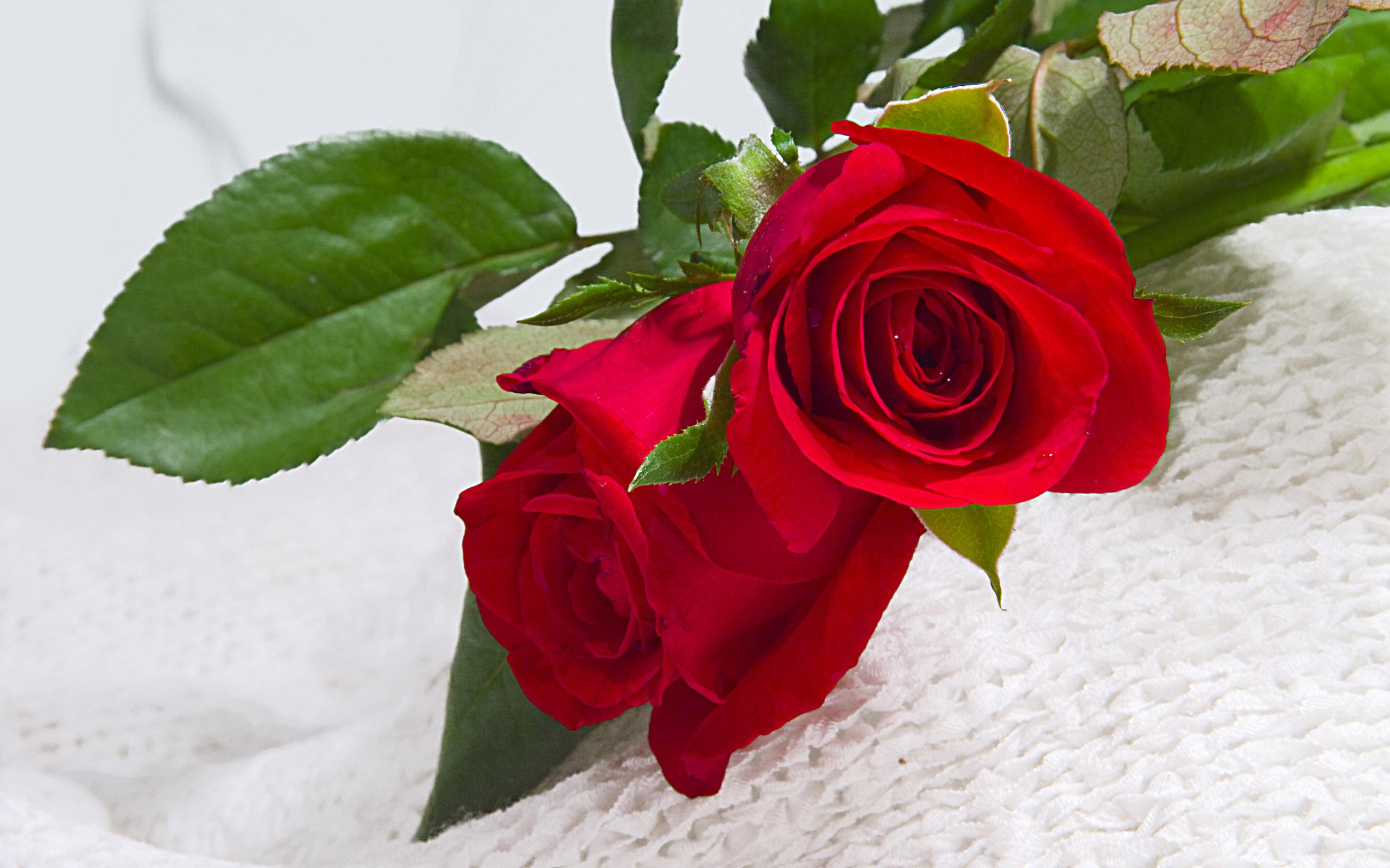 Dùng hoa hồng tươi để hết bị mất ngủ