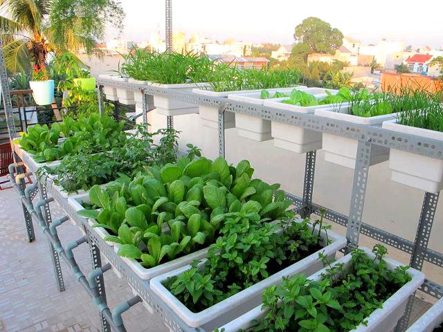 Bé xinh với hàng rau trên sân thượng