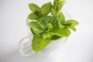 Cách trồng bạc hà mang nhiều lợi ích