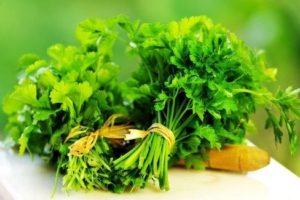 Hướng dẫn cách trồng rau mùi tây tươi tốt