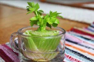 Hướng dẫn cách trồng rau cần tây tại nhà