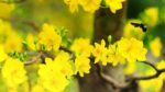 9 loại cây trồng ngày tết ý nghĩa cho năm 2017