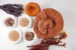 Công dụng của nấm linh chi và cách sử dụng nấm linh chi