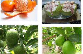 Kỹ thuật trồng cây ăn quả có múi