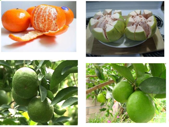 Phòng ngừa sỏi thận từ nước trái cây có múi