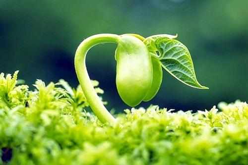 Tinh chất mầm đậu nành rất tốt cho sức khỏe phụ nữ