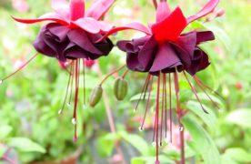 9 loại hoa tết dễ trồng, ra hoa đẹp