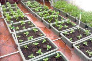 3 cách cải tạo đất trồng rau