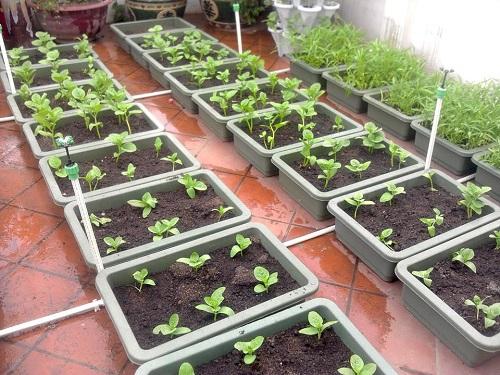 Cách cải tạo đất trồng rau trồng chậu