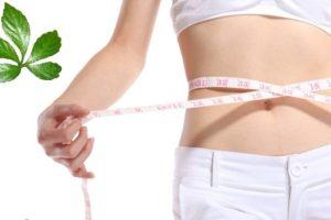 Làm cách nào để sử dụng giảo cổ lam giảm béo hiệu quả nhất?