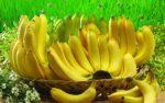 Vài điều lợi ích cần biết về trái chuối