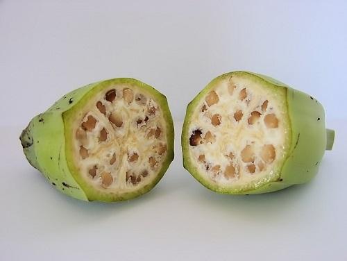 cây chuối hột trị bệnh tiểu đường