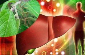 Cách sử dụng cây an xoa chữa bệnh gan cho hiệu quả nhanh nhất