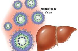 Liệu cà gai leo có đủ sức để đẩy lùi bệnh viêm gan B?