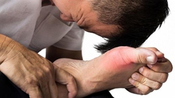 cây lá lốt chữa bệnh gout
