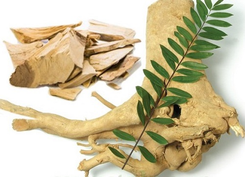 cây mật nhân trị bệnh tiểu đường