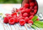 Chia sẻ cách trồng cây mâm xôi nhanh ra quả