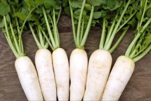 Công dụng của củ cải trắng và những lưu ý ít người biết