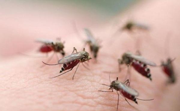Dùng cây nhọ nồi chữa sốt xuất huyết cho hiệu quả cao và nhanh chóng 1