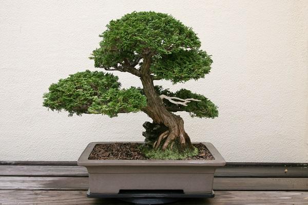 Bộ cây cảnh tứ quý gồm cây gì? Cách bày trí ra sao để hợp phong thủy?