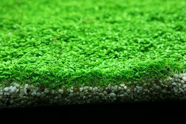 Sự thật về cây trồng thủy sinh bạn nên biết