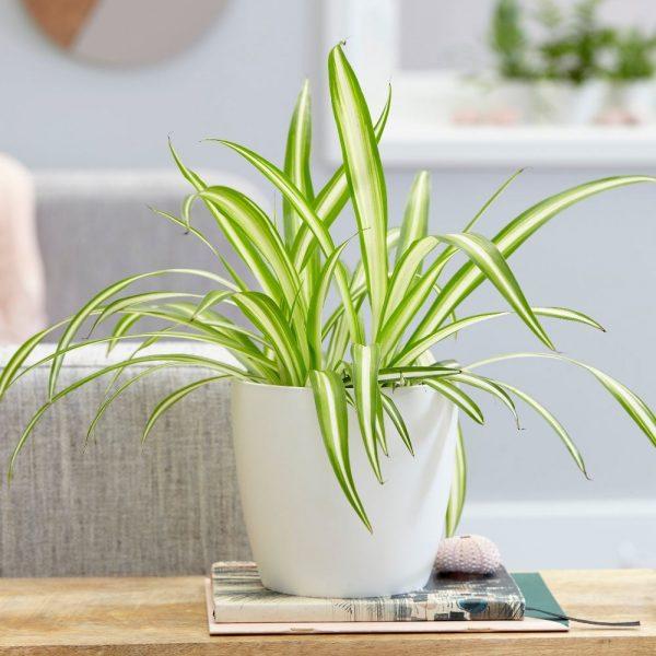 Top 10 loại cây rất tốt để trồng trong phòng ngủ nhà bạn