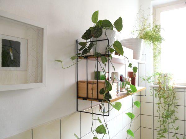 Tuyệt chiêu chọn cây trồng trong nhà tắm