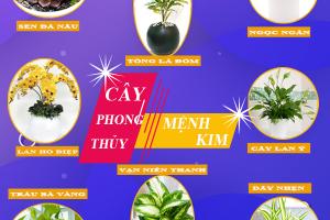 Mệnh Kim trồng cây gì thì gia tăng tài vận, gặp nhiều may mắn, thuận lợi