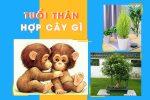 Tuổi Thân hợp cây gì? Cùng đi tìm câu trả lời với người cầm tinh con Khỉ