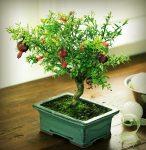 Top 10 cây phong thủy người giàu thường trồng