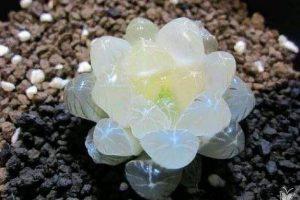 09 điều thú vị và cách chăm sóc cây sen đá khỏe mạnh