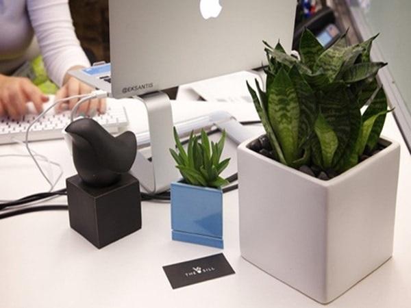 Các loại cây phong thủy văn phòng và cách bài trí cây giúp bạn chiêu tài