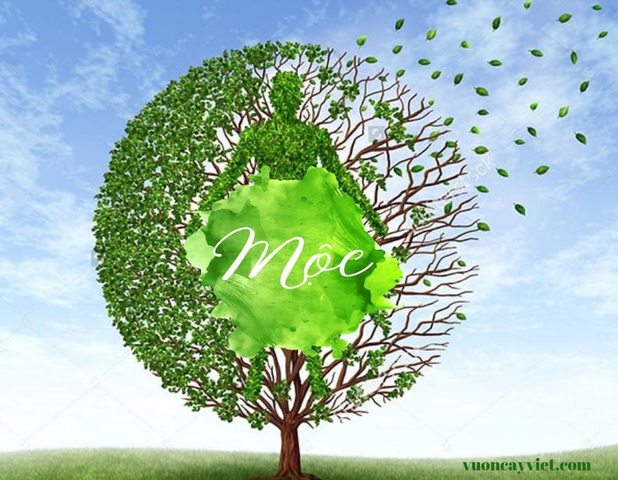 Cây Bàng Singapore hợp mệnh gì? Ý nghĩa phong thủy của cây Bàng Singapore