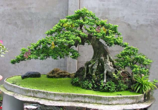 Trồng cây gì hiệu quả kinh tế cao nhất hiện nay