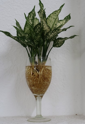 Mách bạn cách trồng cây thủy sinh trang trí bàn làm việc cực đẹp