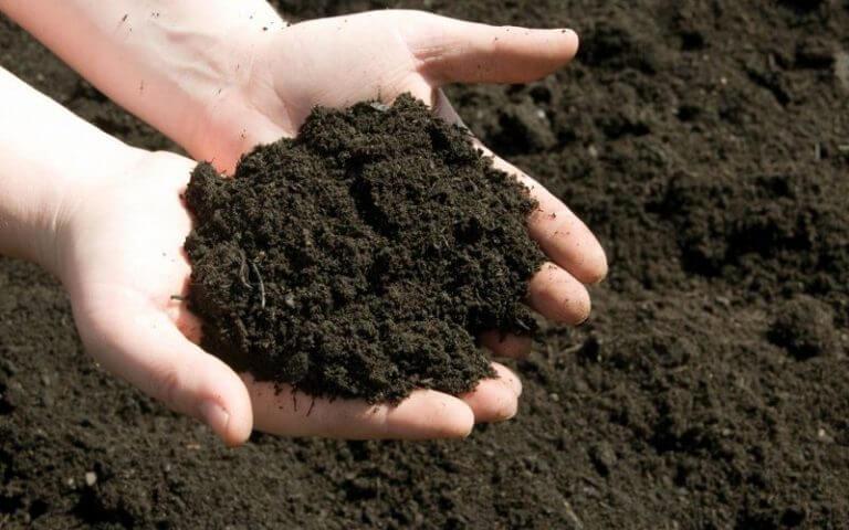 Cách ủ phân chuồng cho hoai mục để bón cây