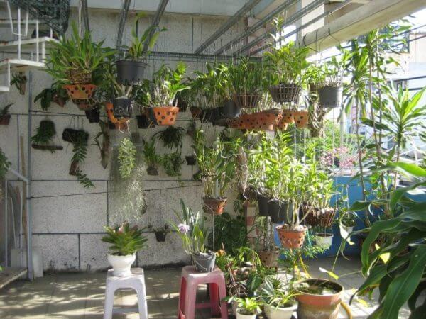 Những chú ý, sai lầm khi chăm sóc phong lan