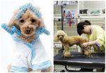 7 bước kinh doanh spa cho thú cưng đầy tiềm năng