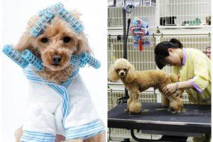 Yếu tố an toàn cho thú cưng và cả người chăm sóc được kiến trúc sư lưu ý với những thiết kế đảm bảo an toàn.