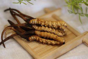 8 tác dụng của đông trùng hạ thảo