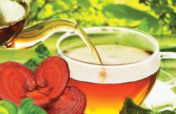 Nấm linh chi – thuốc bổ khí dưỡng âm hiệu quả an toàn
