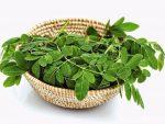 Cây chùm ngây: Tác dụng và bài thuốc từ cây chùm ngây